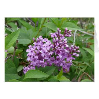 Purple Lilacs Card