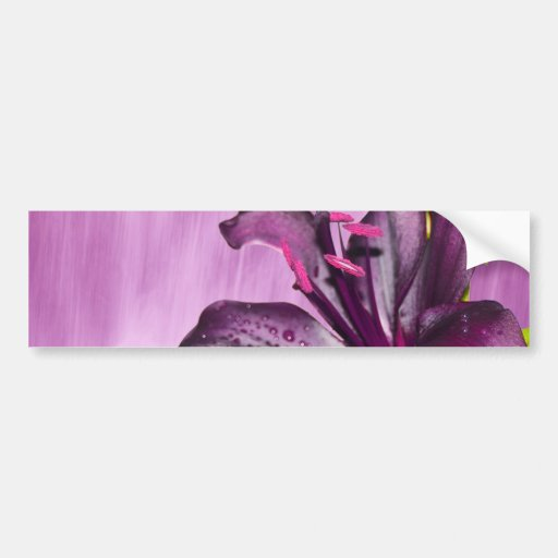Purple Lily with Waterfall Bumper Sticker