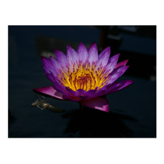 Purple Lotus Waterlily & Dragonfly Nymph Postcard