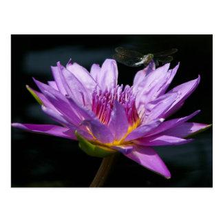 Purple Lotus Waterlily & Dragonfly Postcard