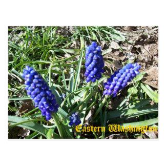 Purple Lupine Card