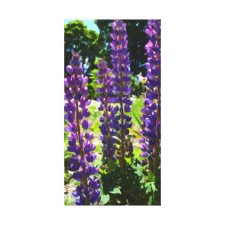 Purple Lupins Canvas Print