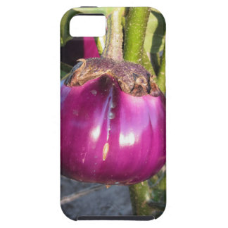 Purple round eggplant hanging on tree tough iPhone 5 case