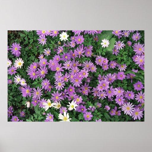 Purple Waterlilies Print