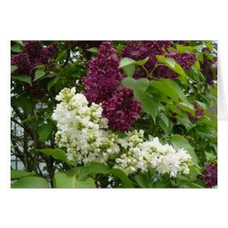 Purple & White Lilacs Notecard Greeting Card