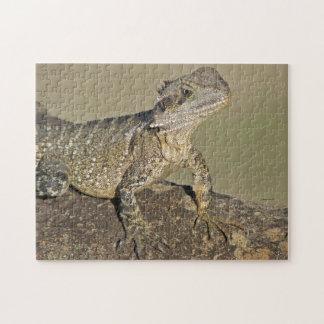 Puzzle Lizard Wildlife Animals