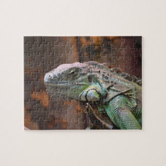Puzzle with colourful Iguana lizard