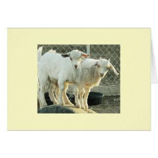Pygmy Goat Twins Card