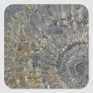 Pyritized Ammonite Square Sticker