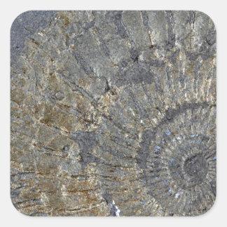 Pyritized Ammonite Square Sticker
