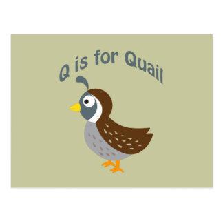 Q is for Quail Postcard