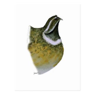 quail bird, tony fernandes postcard