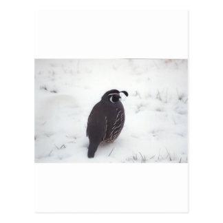 Quail in Snow Postcard