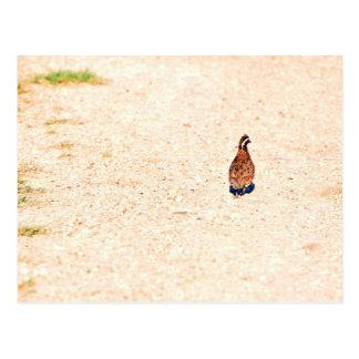 Quail on the Run Postcard