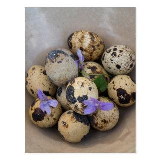 Quails eggs & flowers 7533 postcard