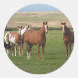 Quarter Horse Herd Stickers