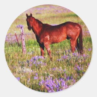 Quarter horse in pasture classic round sticker
