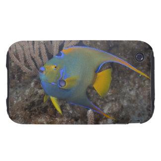 Queen Angelfish (Holacanthus ciliaris) swimming Tough iPhone 3 Case