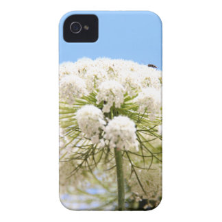Queen Anne's white Lace flower against blue sky iPhone 4 Covers