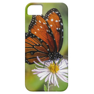 Queen butterfly iPhone 5 covers