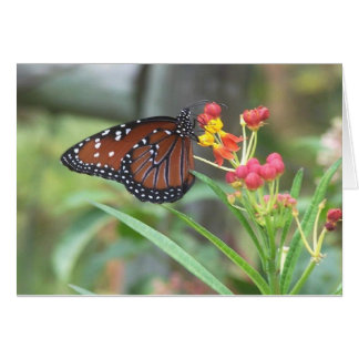 Queen Butterfly Notecard Note Card