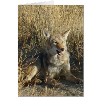 R0018 Coyote Laying Card