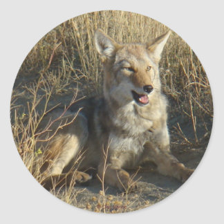 R0018 Coyote Laying Classic Round Sticker