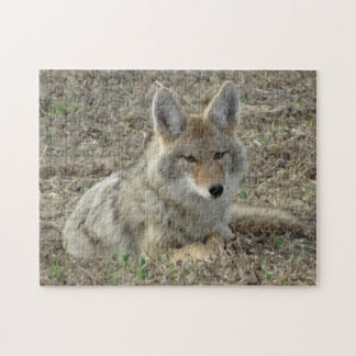 R0022 Coyote Laying Jigsaw Puzzle