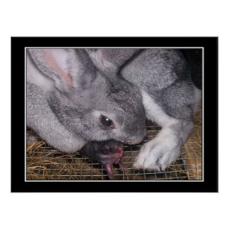 Rabbit with Newborn Baby Poster