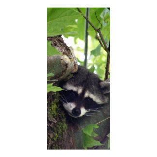 Raccoon Customised Rack Card