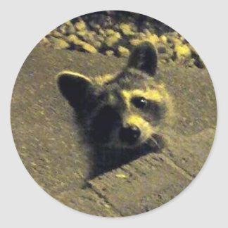 Raccoon ~ Face of an Angel Classic Round Sticker