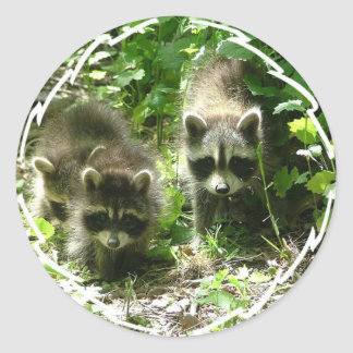 Raccoon Habitat Stickers