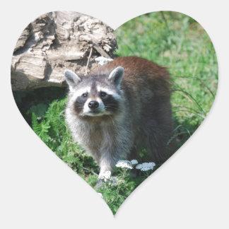 Raccoon Heart Sticker