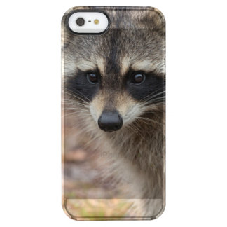 Raccoon, Procyon lotor, Florida, USA 3 Clear iPhone SE/5/5s Case