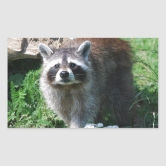 Raccoon Rectangular Sticker