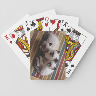 Ragdoll Deck of Cards