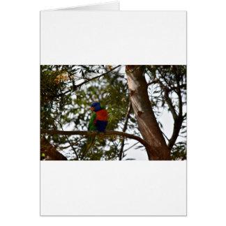 RAINBOW LORIKEET RURAL QUEENSLAND AUSTRALIA CARD