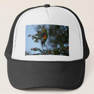 RAINBOW LORIKEET RURAL QUEENSLAND AUSTRALIA TRUCKER HAT