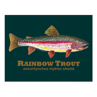 Rainbow Trout Latin Postcard