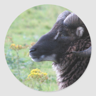 Ram Classic Round Sticker