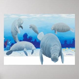 Randalls manatees poster