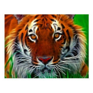 Rare Sumatran Tiger from Indonesia Postcard