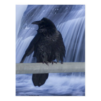 Raven Perched Over a Waterfall Postcard