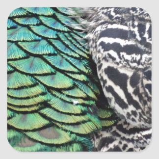 Ravishing Peafowl Feathers Square Sticker