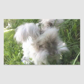 "Rectangle Stickers - English Angora  ""Bradley"""