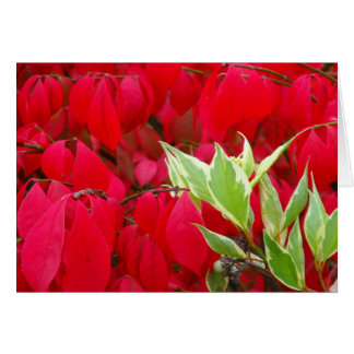 Red and Green Leaves Greeting Card