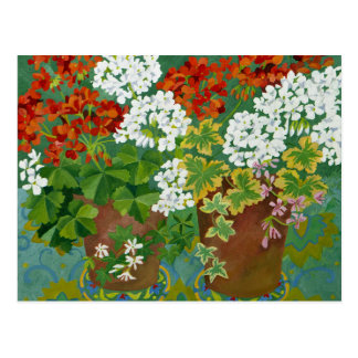 Red and white geraniums in pots 2013 postcard