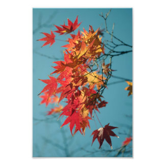 Red and yellow autumn leaves on a blue background photograph