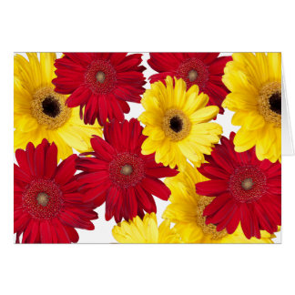 Red and Yellow Gerber Daisy Delight Card