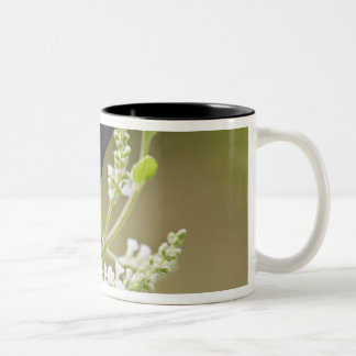 Red-bordered Pixie on white brush Two-Tone Coffee Mug
